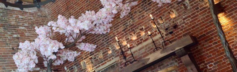 canopy blossom tree